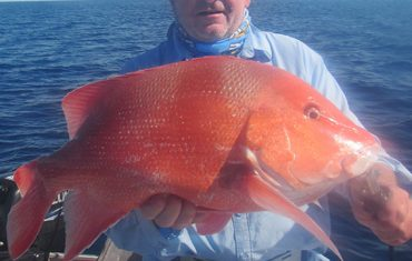 A fantastic 'big red'